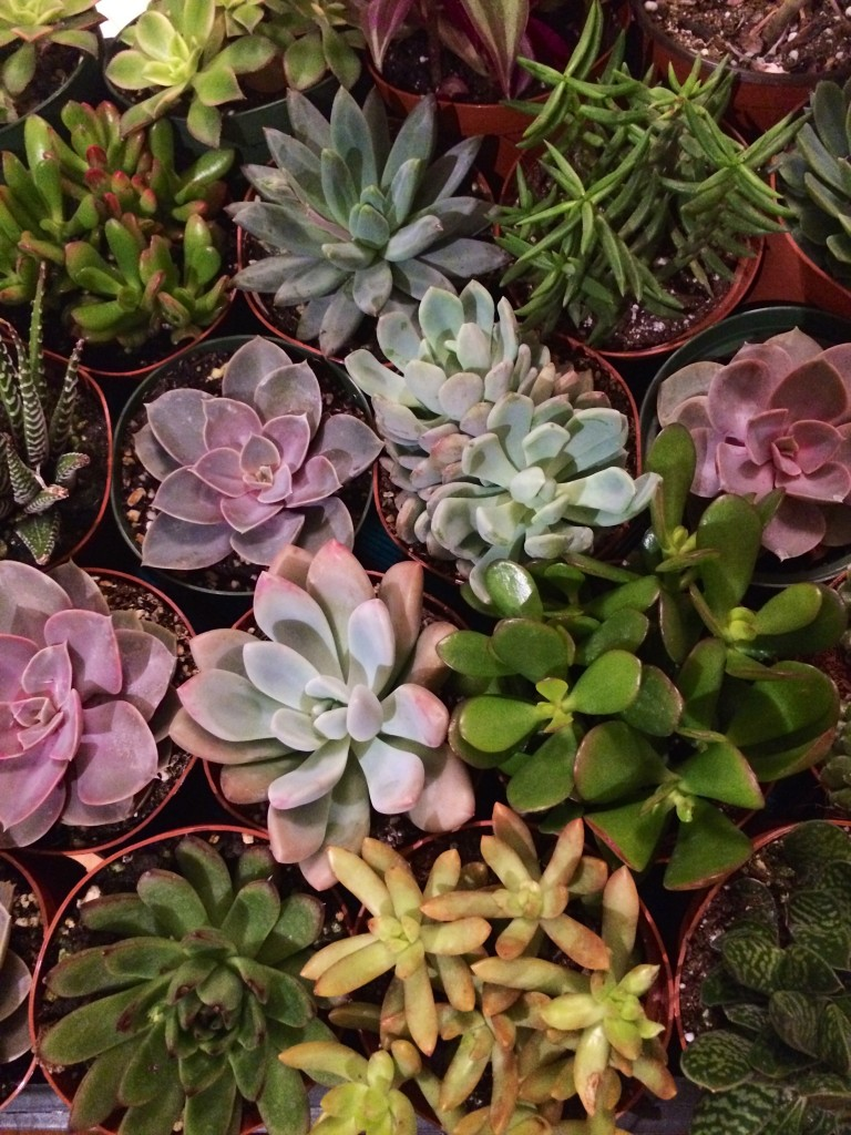 plants for wedding, eco friendly alternatives to flowers, wedding, succulents