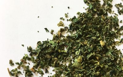 The Benefits of Nettle